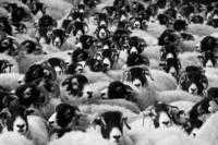 https://convertingteam.com/blog/images/crowd-agriculture-countryside-animals-sheep-farm-17482.jpg